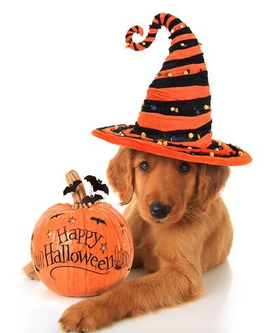 Halloween Safety and Your Pet