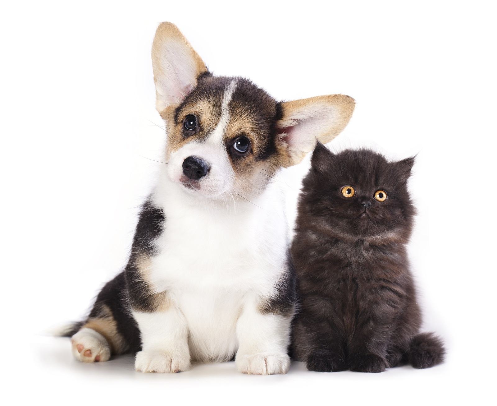 Getting a New Puppy or Kitten? A few good things to know…