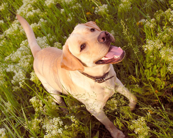 Summer Safety Tips for your Pets