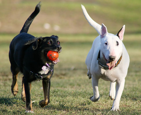 dogs playing at dog park edmonton