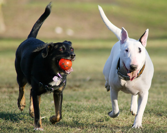 Off Leash Safety Tips for your Pets
