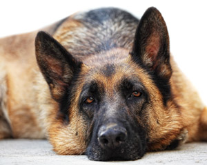 Seizures and how dogs and cats can be affected - mactaggartvet.com