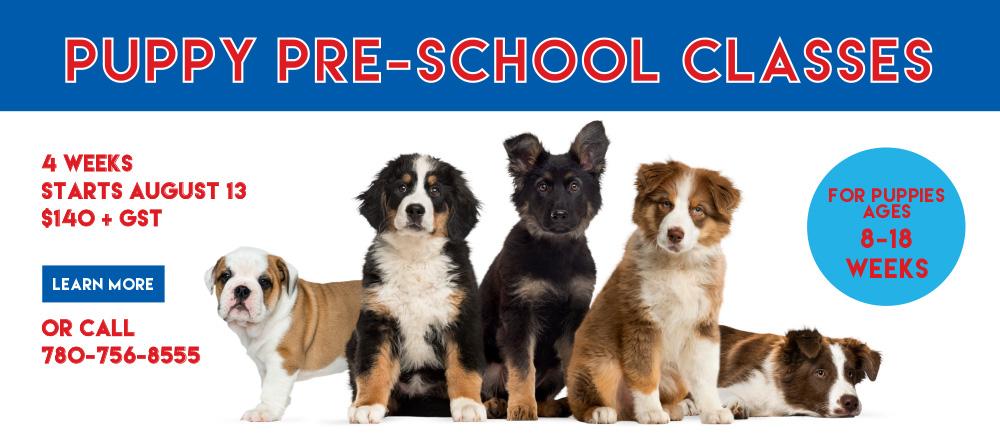 puppy and dog training classes edmonton