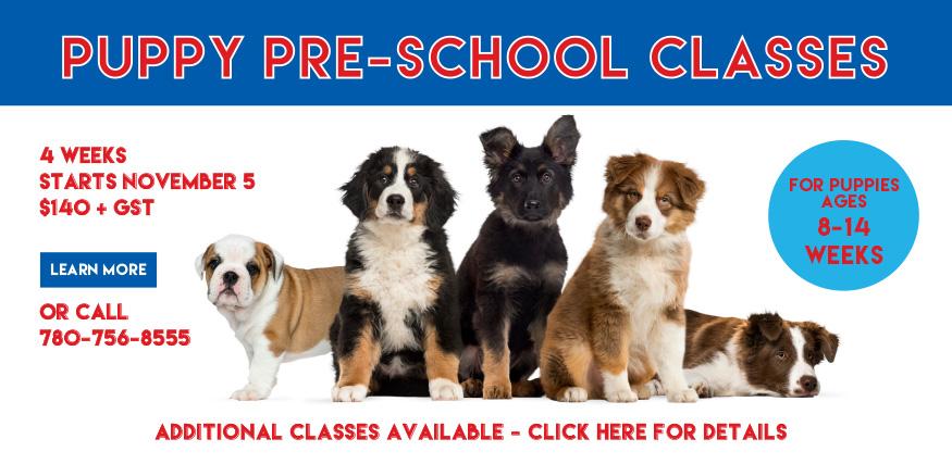 puppy training classes edmonton