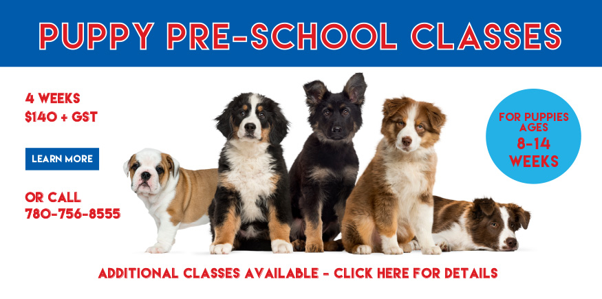 puppy training classes edmonton